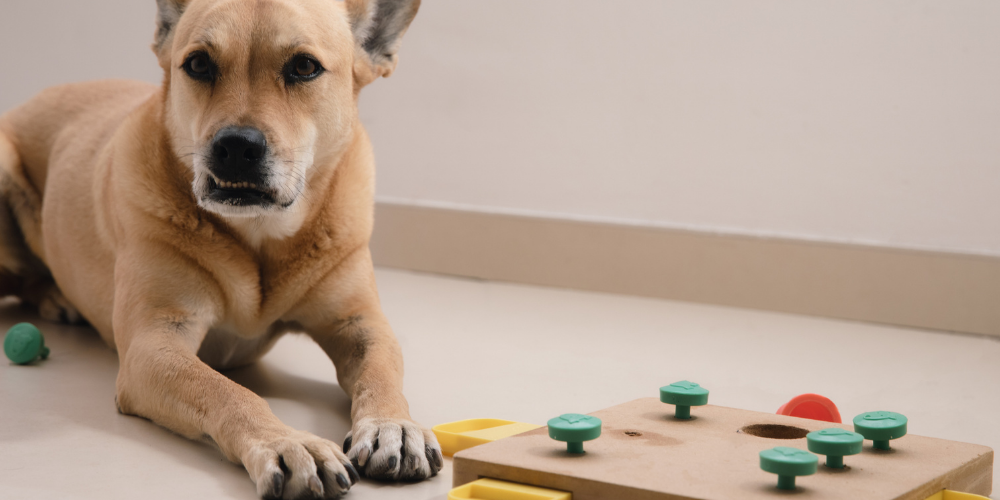 A picture of a crossbreed dog with a canine puzzle toy