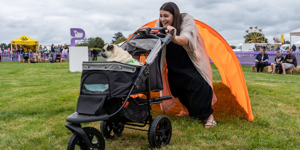A picture of Puggy Smalls on the Petsure Games agility course